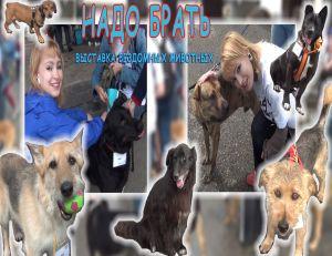 значок проект собаки